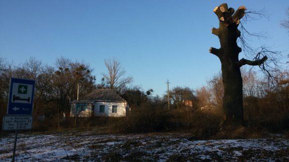 Кому заважають дерева? На виїзді з Богуслава обрізали багатолітній дуб…
