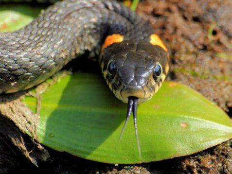Обережно, змії!